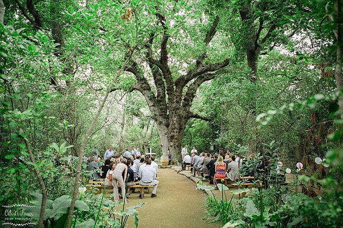 Destination Wedding in South Africa Mini Guide by Event Affairs - Forest Location photography by Aglow Photography