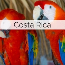 Wedding Suppliers in Costa Rica